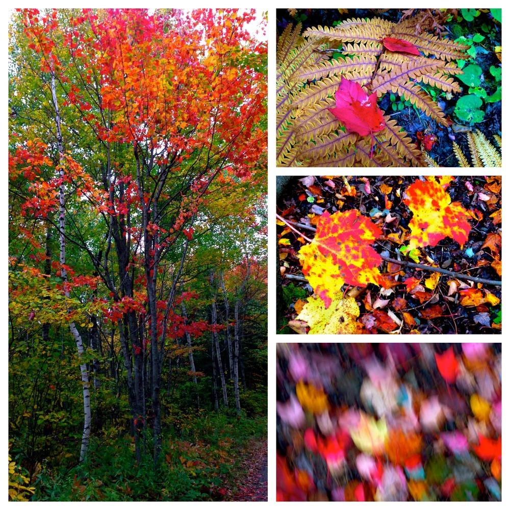 Centennial Park October 1, 2014