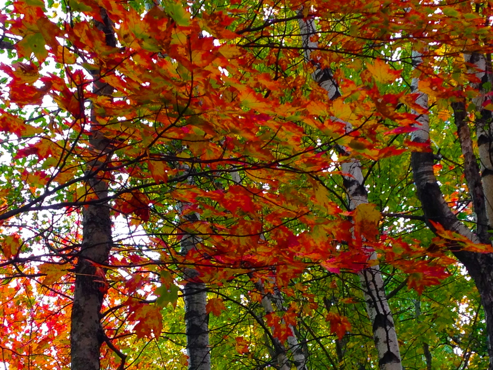 Autumn leaves october 1 2015