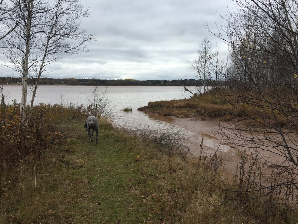 Petitcodiac River at High Tide