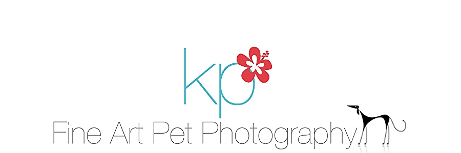 Karen Presecan Photography | Stafford, VA | Coastal NC | Pet Photographer
