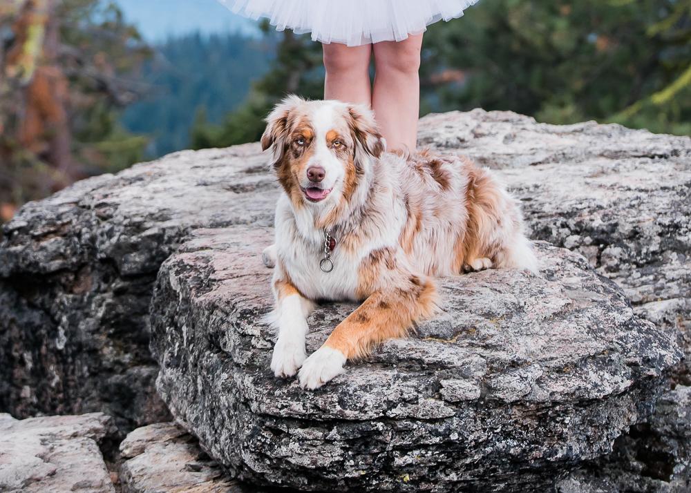 Dog Model: Levi