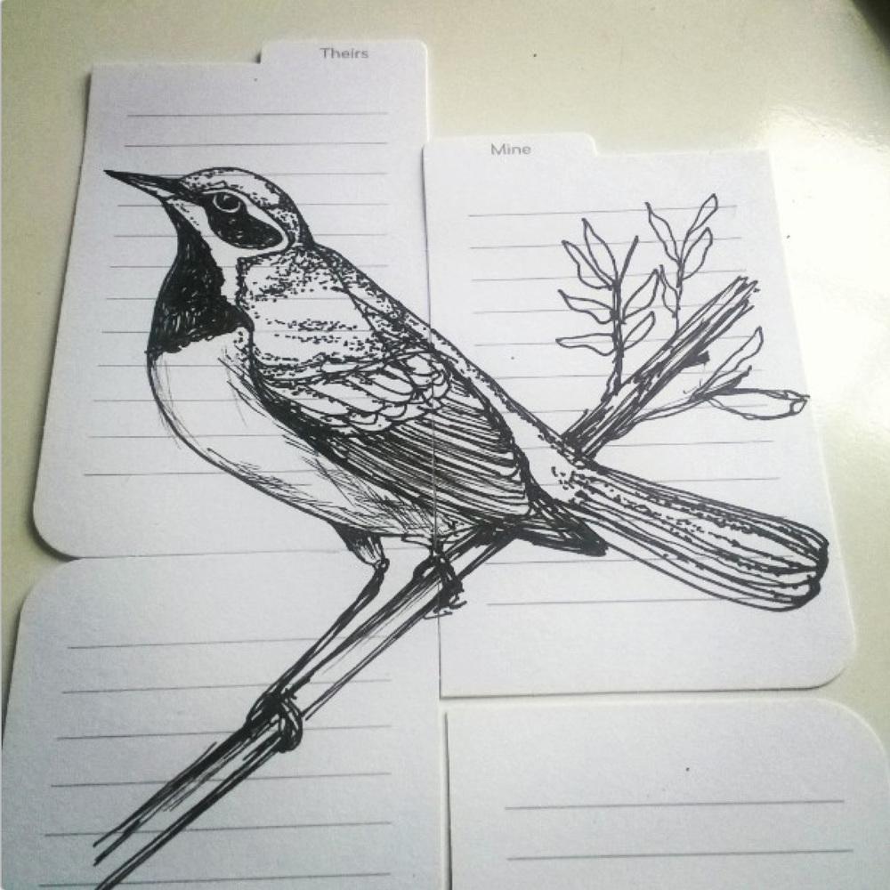 KendraShedenhelm_BirdSketchOnMooPackaging_1