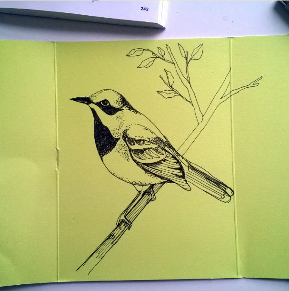 KendraShedenhelm_BirdSketchOnMooPackaging_2