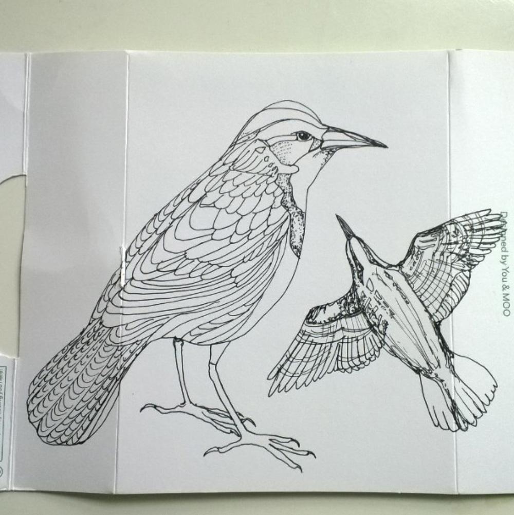 KendraShedenhelm_BirdSketchOnMooPackaging_3