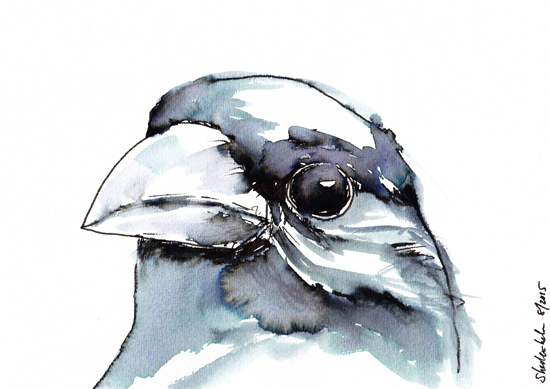 Kendra Shedenhelm Crow Watercolor Sketch