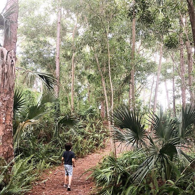 my little #atlasthegreat adventuring makes my heart 💥 // finding things to do in 100 degree weather has been hard this summer, but happy we squeezed this trail in before our weekends get overbooked again 🙏🏻 // #delraybeach #mytinyatlas #atlasarcher #naturelovers #homeschooldays #soflo #floridatourism #ilovewpb #naturewithkids #itsthefreakinweekend #wheretofindme #darlingplaces #theglobewanderer #huffposttravel #letthembelittle #wildcrafted