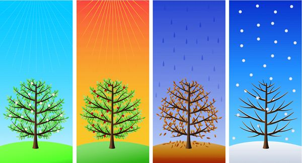 Illustration  showing the changing of seasons on a single tree from www.planet-science.com