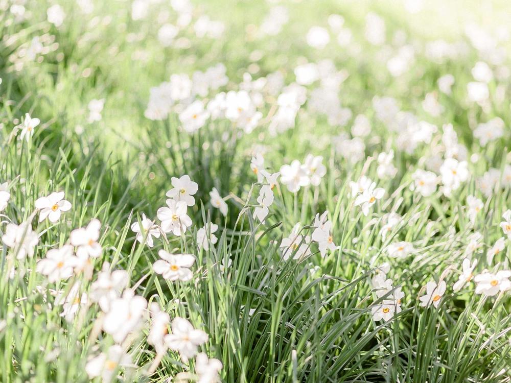 printemps-7.jpg