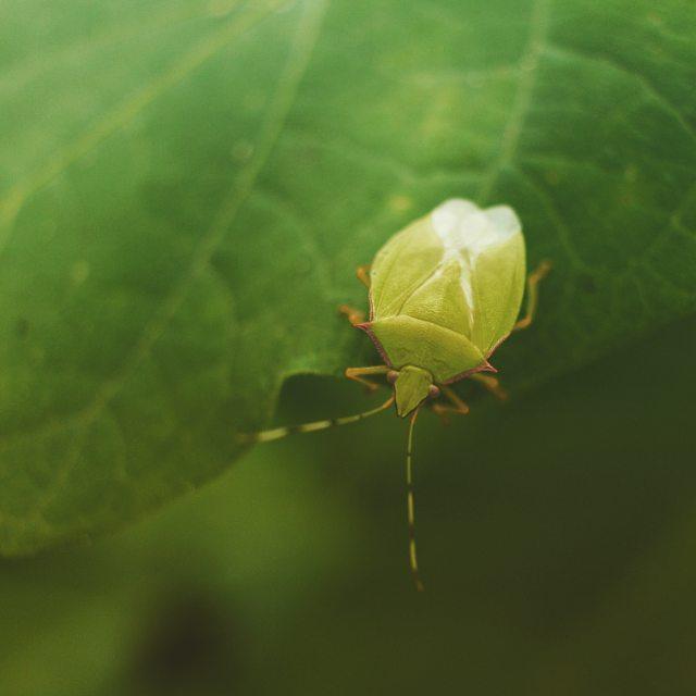 #shieldbug