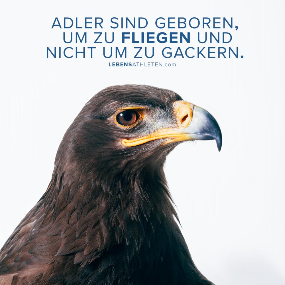 161130_adler.png