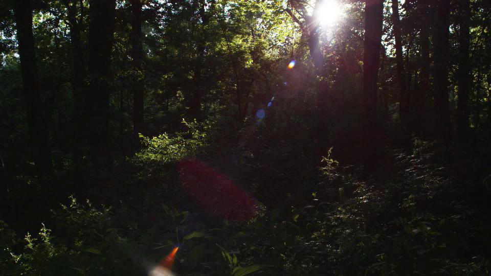 Forest 1 jpg.jpg