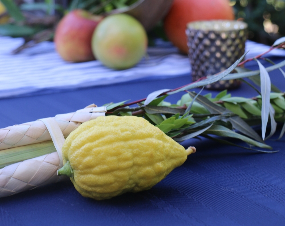 The Lulav and Etrog