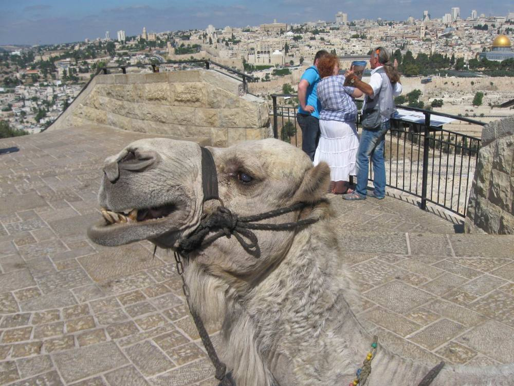 IMG_5049 Camel.jpg