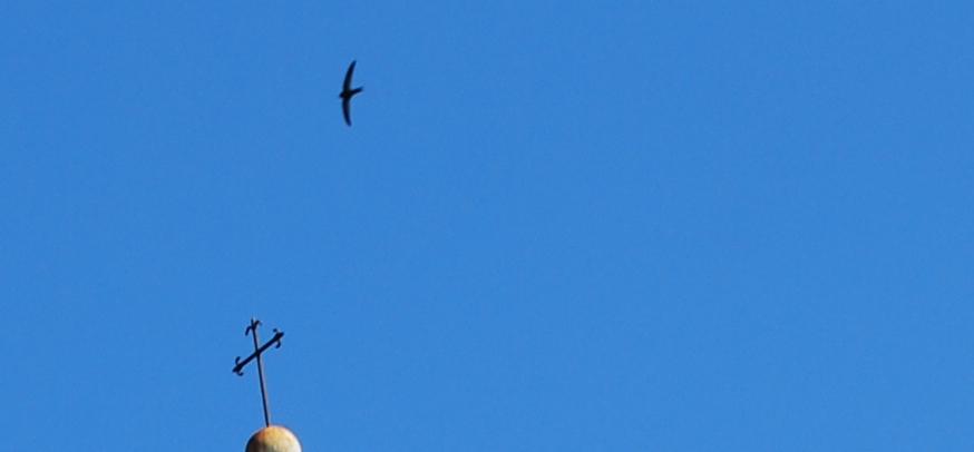 17 July 2014, Cinque Terre