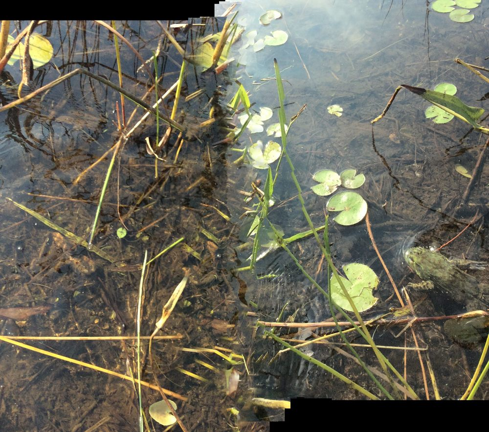 Horseleech Pond_6  Photograph, 2015;   Copyright © Tennyson Woodbridge, 1963 to present