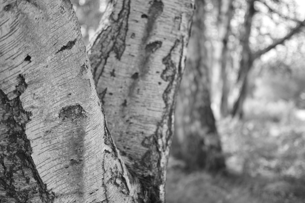 Nearest tree.