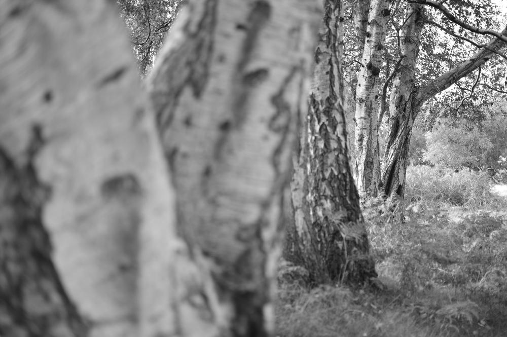 Furthest tree.