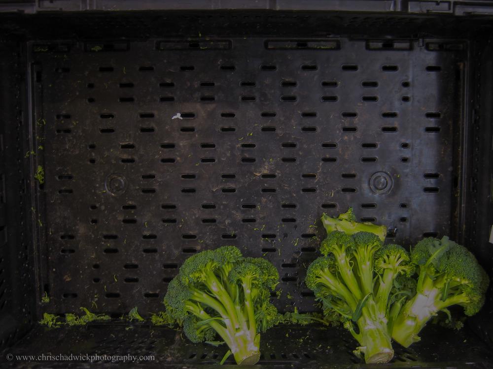 Few   Broccoli in short supply