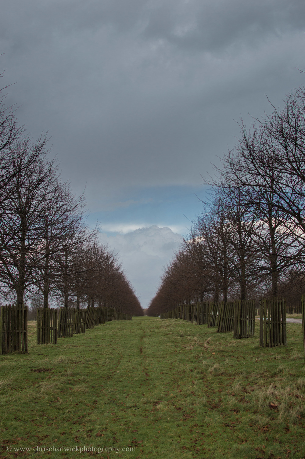 Straight   Straight lines of trees lead to Hampton Court Palace.