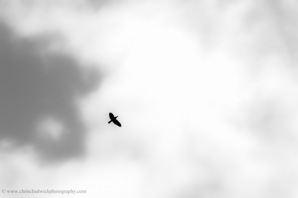 There are some similarities to the helicopter image above, but here the crow is slightly off-centre and heading into the middle. Monochrome definitely enhances the bird as a single point as the background wasn't a plain blue sky as in the helicopter image. Losing the blue removes a distraction.