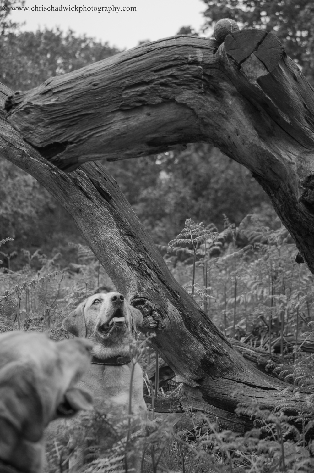 The image above contains an example of the eye-line. The subject appears to be the in-focus dog at the rear, but if we follow the gaze of both dogs we see the tennis ball perched on top of the tree. How on earth did it get there?