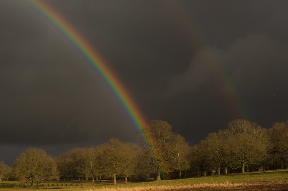 Rainbows in Richmond Park.jpg
