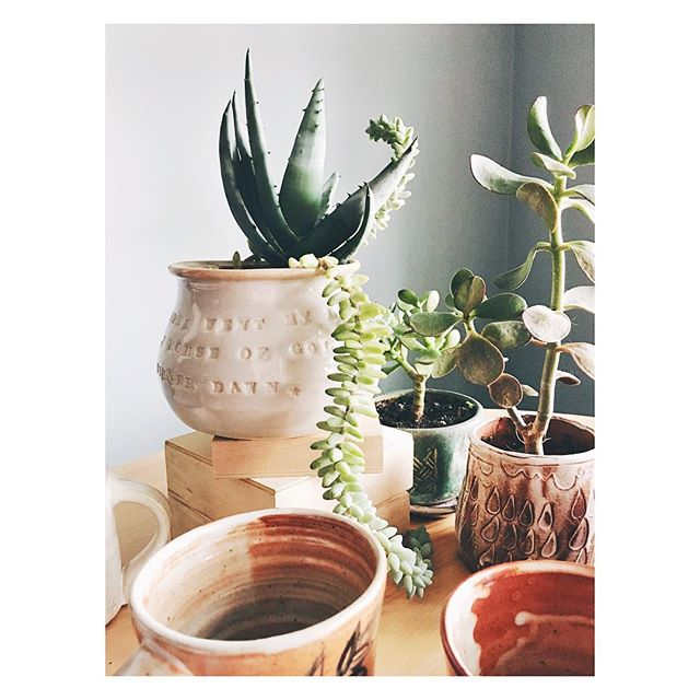 Why should mugs get all the attention? The succulent from the last photo, now as the star! (Also, the sun came out. THE SUN CAME OUT!)