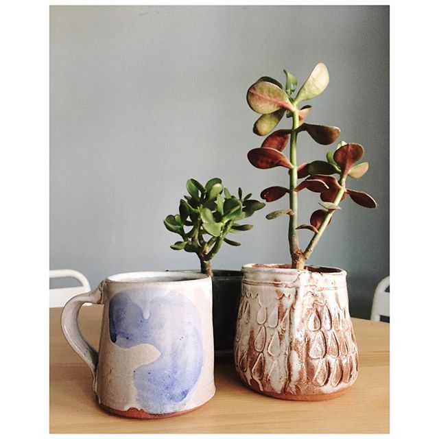 From where I sit: the cup from this morning's coffee and the succulents that are like migratory birds these days, seeking sunshine in faraway places.