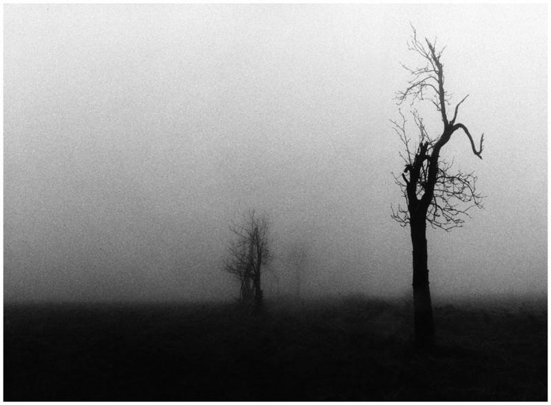 Barbara Radova,Sad Landscape