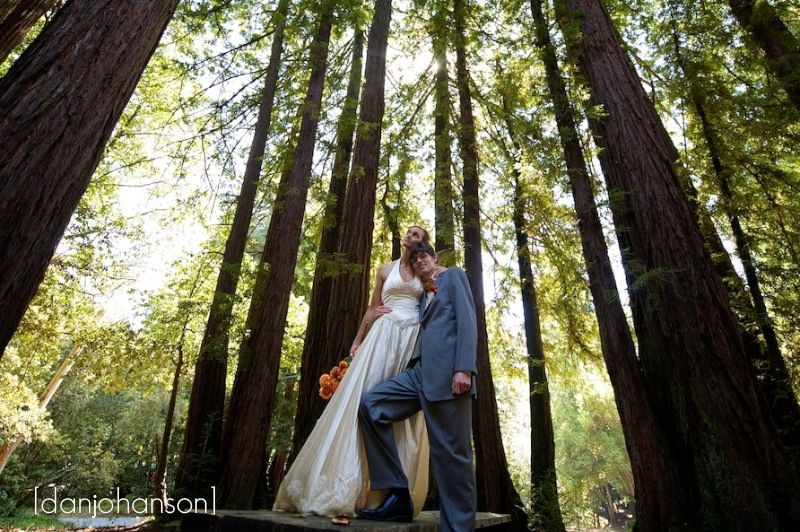 gilroy hills redwood trees bride and groom