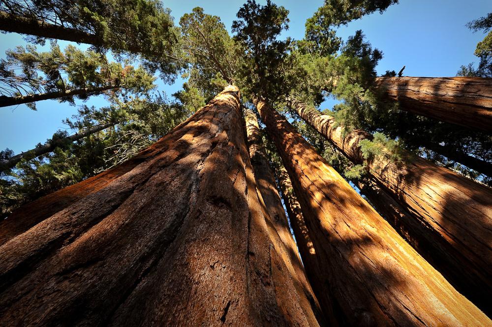 Feeling small amongst a grove of giants never felt better.