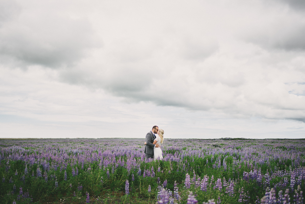 iceland wedding lupine field