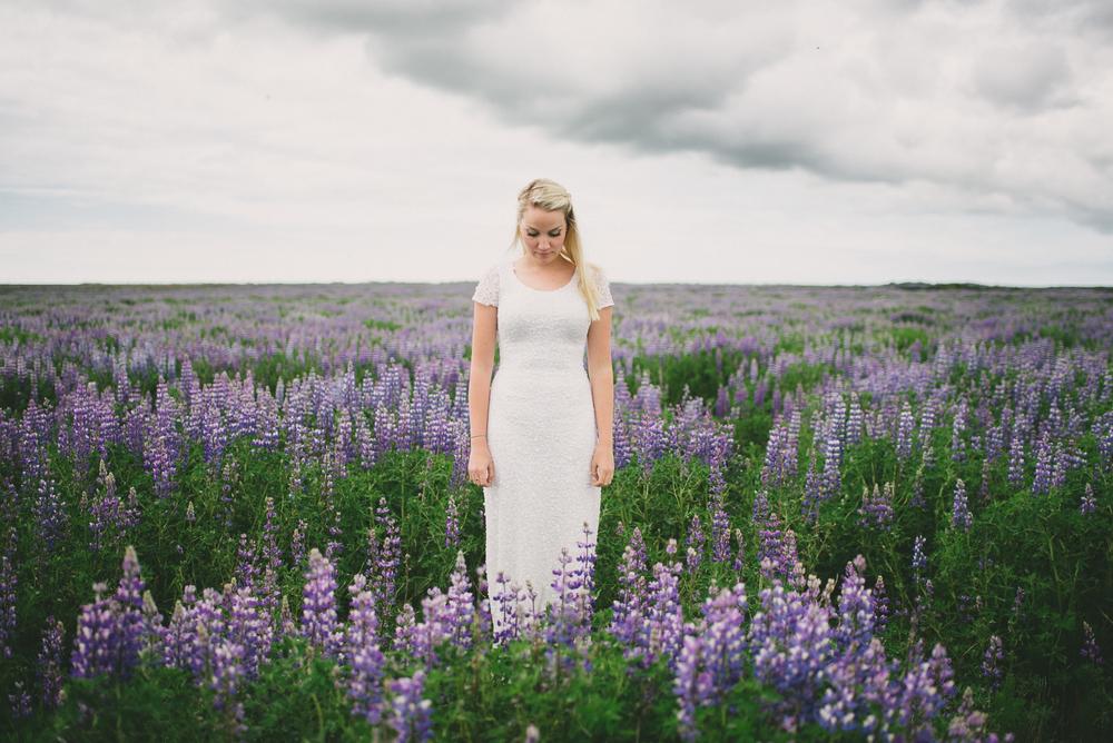 bride iceland lupine