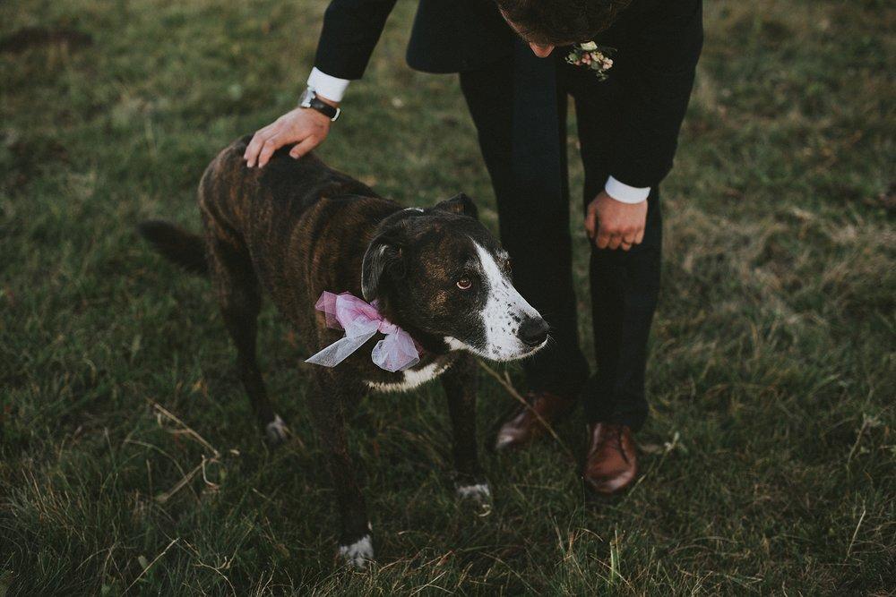 groom pet dog portrait kananaskis elopement