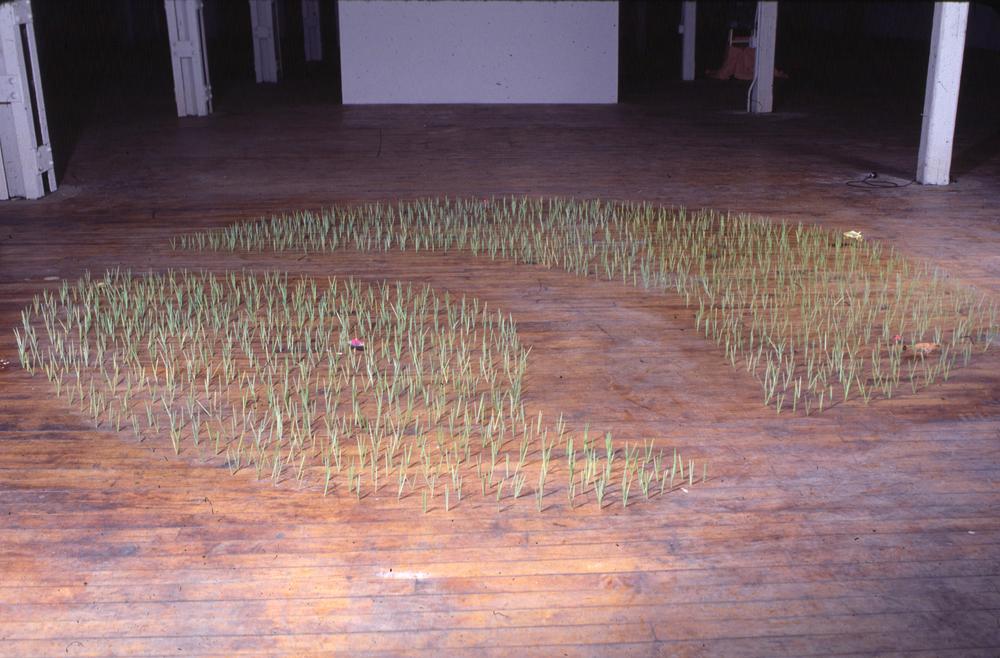 Lawn, 1998
