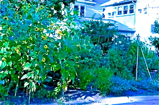 spiritedtable_gardens_photo.jpg