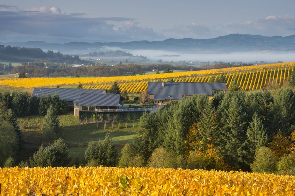 Willakenzie Vineyards-Oregon's Willamette Valley