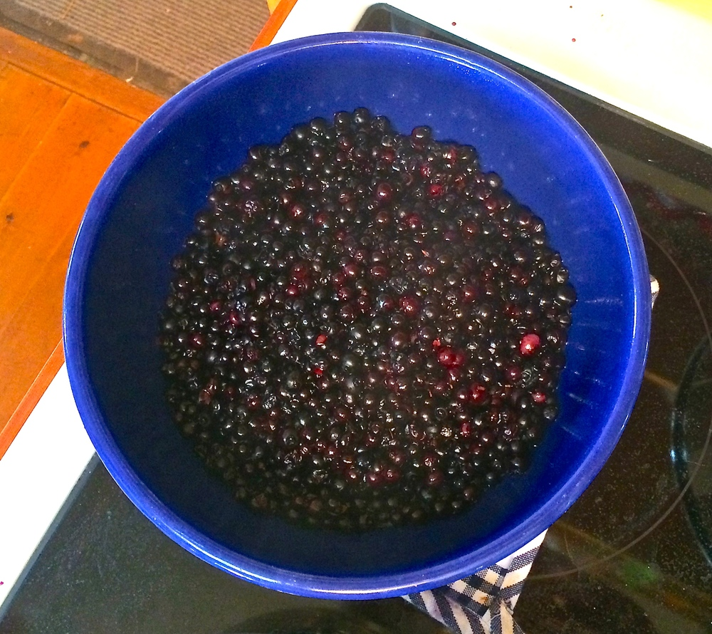 After A Dip, Berries Ready to Roll