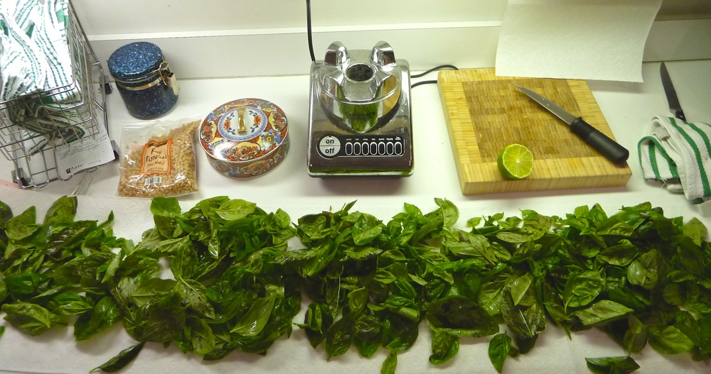 Lay Out the Basil to Dry