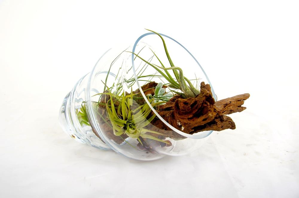 terrarium01.jpg