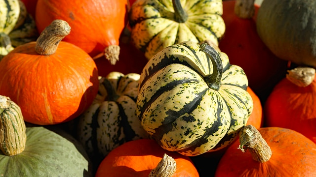TST_MillCityMarket_pumpkins_Fall/Winter_photo.jpeg