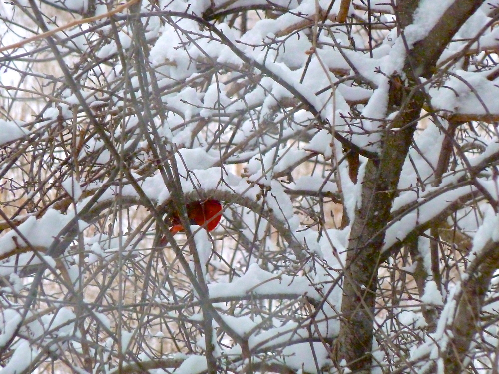 TST_Winter_Outdoors_photo.jpeg