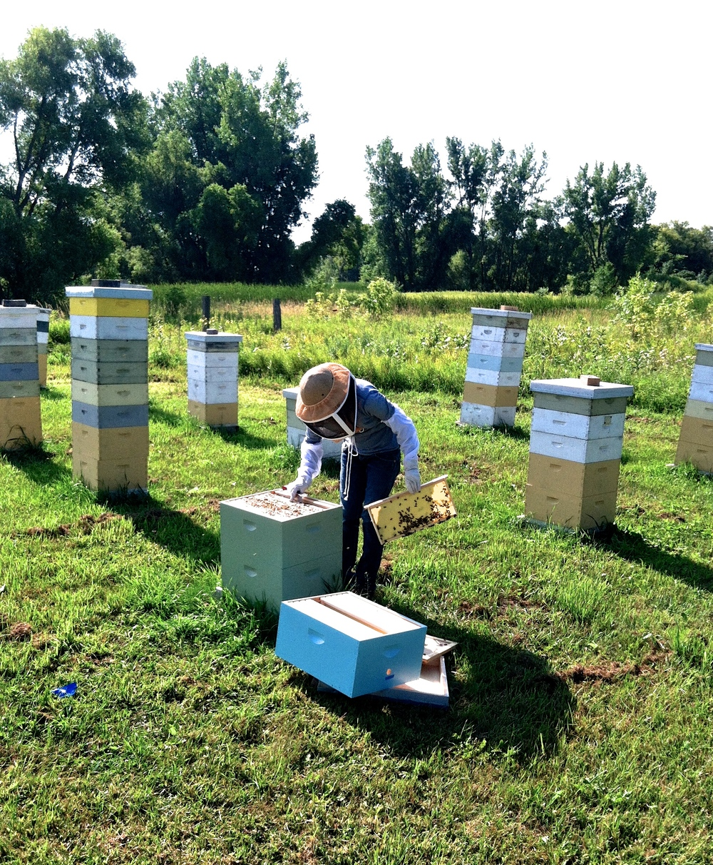 Here I am working with the bees last summer.