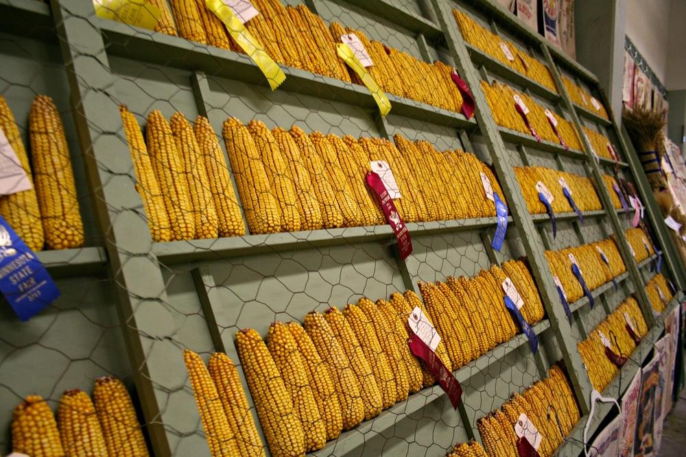 state-fair-corn.jpg