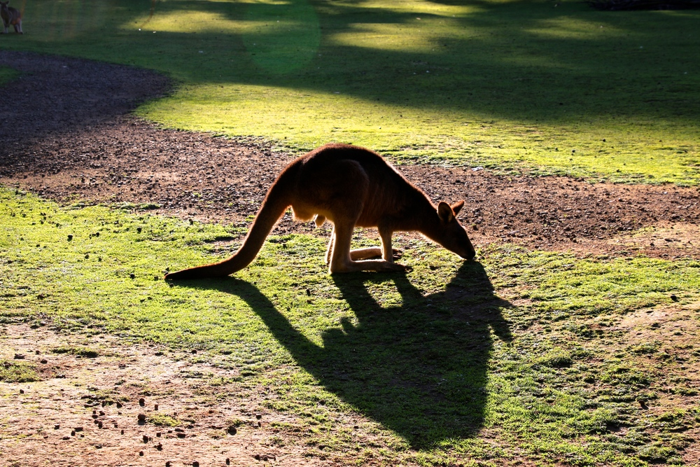 spiritedtable_tasmaniandevil_hobart_australia_travels_photo - 20.JPG