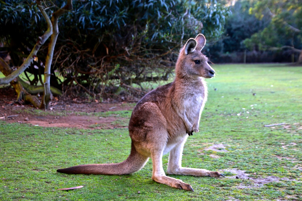 spiritedtable_tasmaniandevil_hobart_australia_travels_photo - 24.JPG