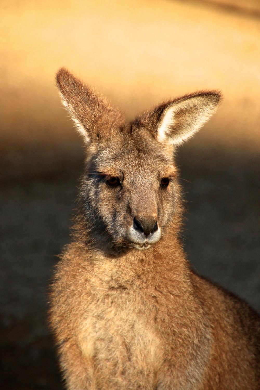 spiritedtable_tasmaniandevil_hobart_australia_travels_photo - 28.jpg