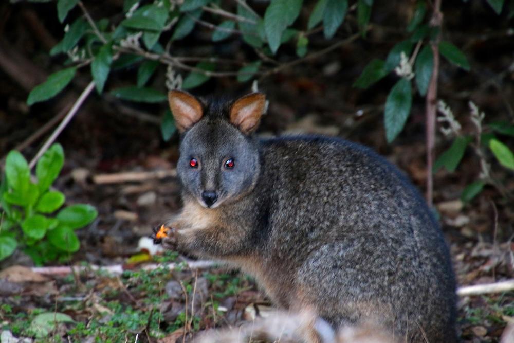 spiritedtable_tasmaniandevil_hobart_australia_travels_photo - 29.JPG