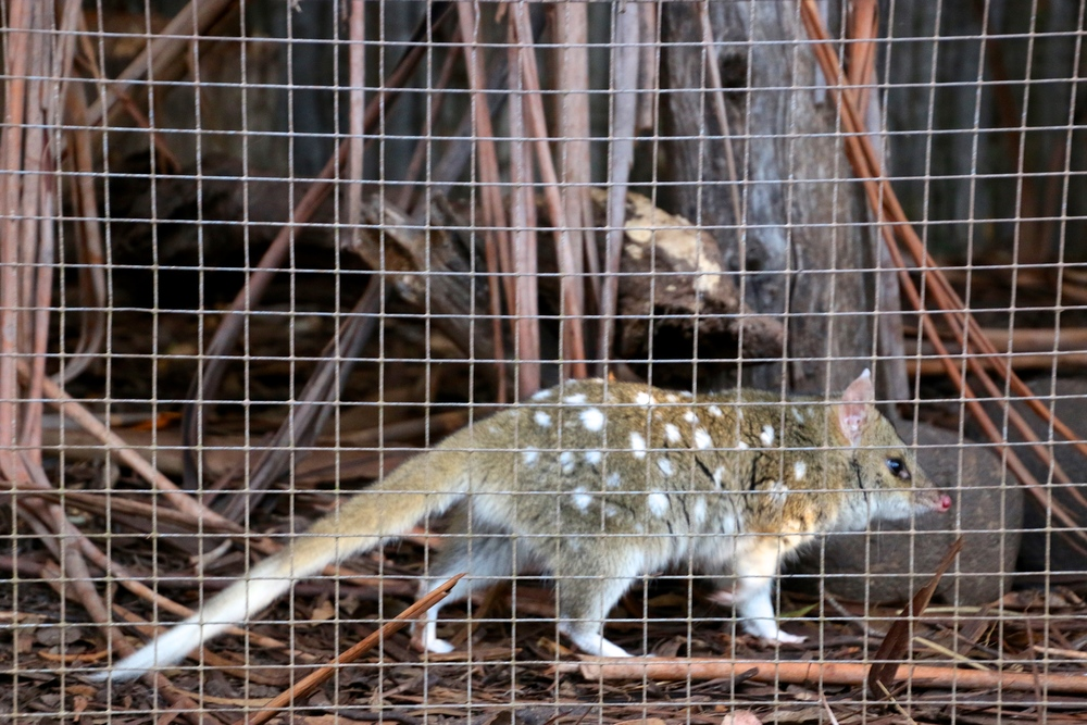 spiritedtable_tasmaniandevil_hobart_australia_travels_photo - 31.JPG