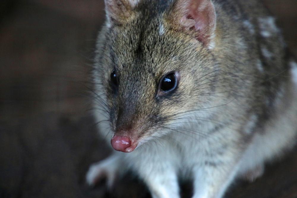spiritedtable_tasmaniandevil_hobart_australia_travels_photo - 44.JPG